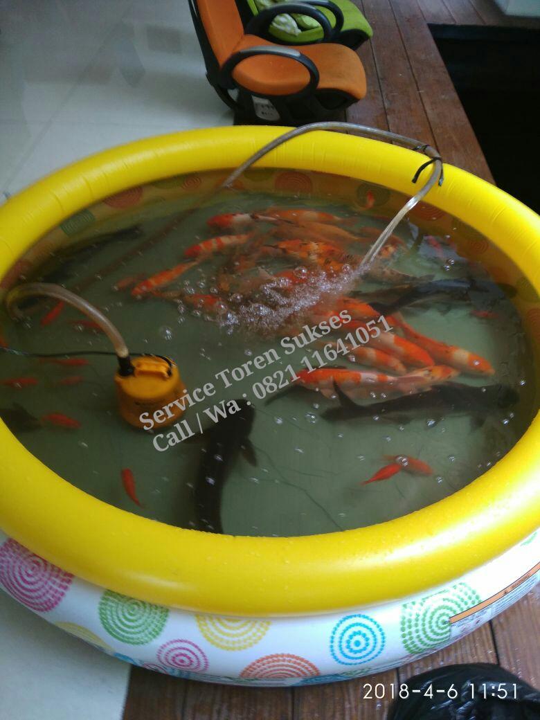 Cuci Kuras Kolam Ikan